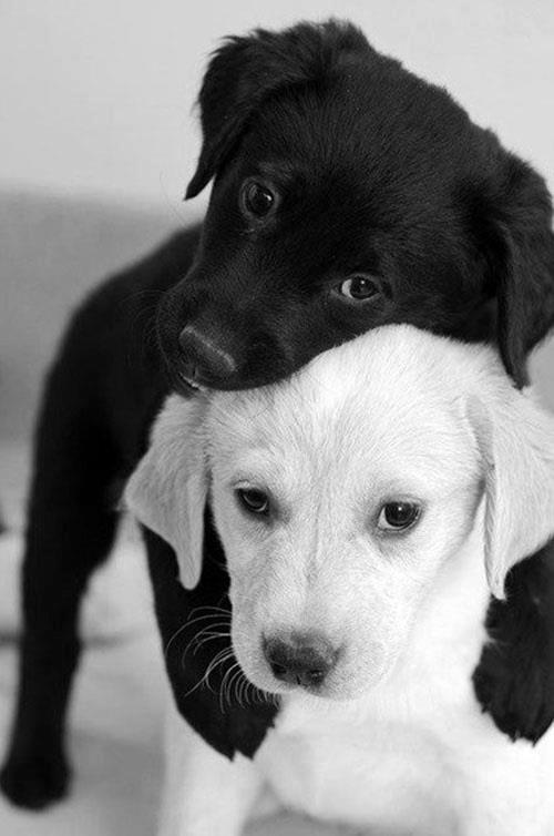 puppy_hug_____by_emmyliaa-d5wtqvp